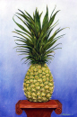 King-Pineapple.jpg (430764 bytes)